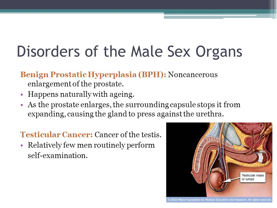 Male sex organ research